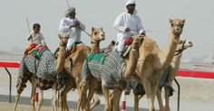 While in Dubai, a Camel Race is a must see. Sultanate Of Oman, Dubai World, Cultural Experience, Camels, Travel List, Outdoor Activities, World Cup, How To Introduce Yourself, Racing
