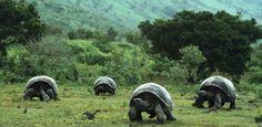 Back to the Roots und die Natur in ihrer ganzen Ursprünglichkeit erleben! Wir stellen Ihnen die 12 größten und wildesten Nationalparks der Welt vor: http://blog.itravel.de/2013/09/30/nationalparks-in-denen-wildnis-noch-wild-ist/?utm_source=Pinterest&utm_medium=Socialmedia&utm_campaign=Pinterest