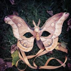 Leather Moth Mask by Alexis Burbank