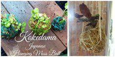 How to Make a Kokedama – Hanging Japanese Moss Balls