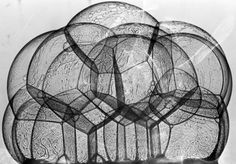 Frei Otto, Seifenlaugenversuch.The soap film models played a major role in the german architect Frei Otto's development of lightweight tent construction.