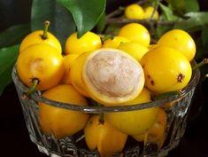 lemon_drop_mangosteen Garcinia edulis
