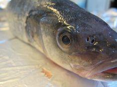 Ganzer Fisch im Ofen -paleo/lowcarb- Rezept  - Gesund Abnehmen! Low carb, wenig Kohlenhydrate und viel Fett! Einen ganzen Fisch zu braten ist geschmackvoller, als nur ein Stück Filet. Mit ausreichender Fettzugabe ist das Braten eines ganzen Fisches eine sehr gesunde Zubereitungsart. Eigengeschmack, Nährstoffe und Vitamine bleiben erhalten. Dabei ist das Braten im Ofen eine unkomplizierte Angelegenheit. Geeignet sind ganze Fische, die nicht mehr in die Pfanne passen. Die Ofenform sollte nicht…