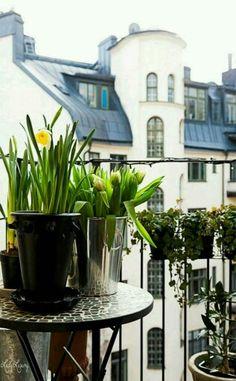 The Paris Apartment- ~♡ ♔LadyLuxury♔