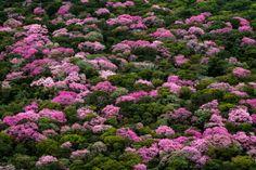 Monumental Beauty: Photographer João Farkas on SP-Foto 2020 and Protecting the Pantanal | Newcity Brazil Kos, Brazil Travel, Environmentalist, Wet And Dry, Image Shows, Art Market, Cover Photos, Plants, Photography