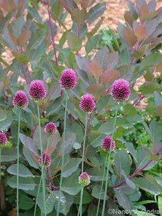 Adiantum pedatum and Cryptotaenia japonica 'Purpurea'