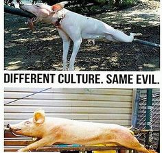 We are all animals.
