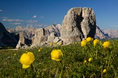 5 Torri fioritura  (Photo: www.bandion.it)