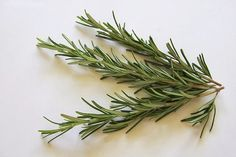 Herbs are a great way to boost hair growth, reduce hair loss, treat dandruff and dry scalp and enhance shine. Here are the best herbs for hair growth Rosemary Tea, Rosemary Plant, Rosemary Health Benefits, Garlic For Hair Growth, Camomille Romaine, Herbs For Hair, Essential Oils For Skin, Fractionated Coconut Oil, Healthy Hair