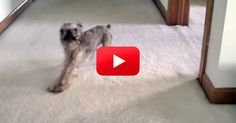 LOL! You Will Be Laughing Throughout This ENTIRE Video! | The Animal Rescue Site Blog