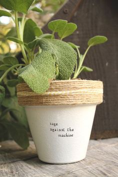 """4"""" Sage Against the Machine » Aloe Indoor and Outdoor Pot or Planter"""