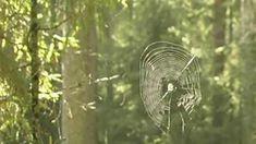 Kuinka hämähäkinseitti syntyy? | Opettajalle | Oppiminen | yle.fi