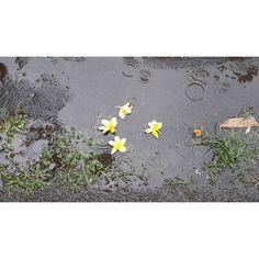 Hujan yang melimpah Engkau siramkan ya Allah; Engkau memulihkan tanah milik-Mu yang gersang Mazmur 68:9  You sent abundant rain O God to refresh the weary land. Psalm 68:9 NLT  @jpccmen @deeperbible  #jpccmenchallenge #verseoftoday #bibleverse #bibleaddict #biblestudy #biblegem #levelup #support #challenge #jpccmenschallenge #healthyspirit #rain #water #soul #raindown #nature #instapic by @peterskriss via http://ift.tt/1RAKbXL