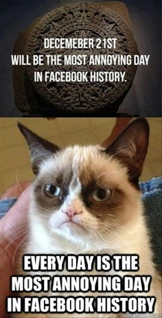 Grumpy Cat on December grumpy cat memes - Cat memes - kitty cat humor funny joke gato chat captions feline laugh photo Funny Grumpy Cat Memes, Funny Cats, Funny Animals, Funny Memes, Hilarious, Animal Memes, Angry Cat, I Love To Laugh, Baby Cats