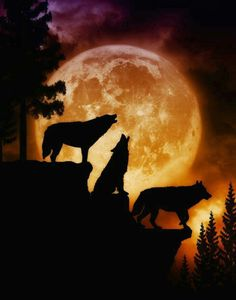 5 wolves representing family (pack) with moonlight scene in background in frame