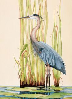 1 - Great Blue Heron by Gene Rizzo Giclee Prints ~ 11x15 12x16 15x22 16x24 22x30 24x32 32x44 36x48 x x