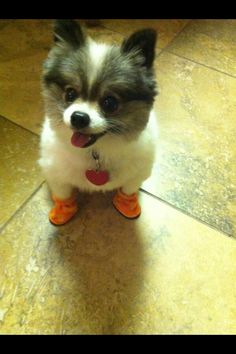 puppy in booties!!