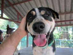 A dog from one of the 11 Great Volunteer-Ready Dog Shelters In Thailand
