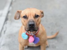 LUCY – A1085076