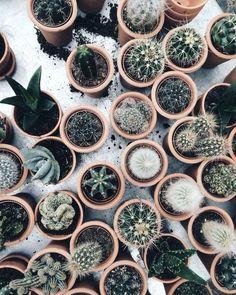 Картинки по запросу кактусы на заставку