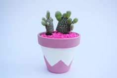 Cactus and hand-painted plant pot