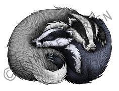 Badger Couple Illustration A3 Print on 175gsm by LyndseyGreen