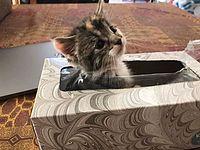 姿が見えなくなった子猫ちゃん 家を1時間探した結果、意外な場所からかわいい形で見つかる