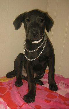Macho - 3 month old, neutered male, lab mix, ID#062419G