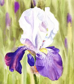 'Iris Flower Purple Dance' - http://irina-sztukowski.artistwebsites.com/featured/iris-flower-purple-dance-irina-sztukowski.html