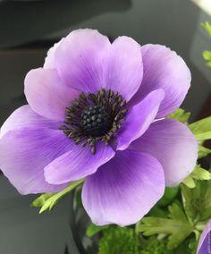 Интерьерные композиции ручной работы. Заказать Анемоне, цветок вдохновения..... Landora (Galitn). Ярмарка Мастеров. Цветы ручной работы, подарок