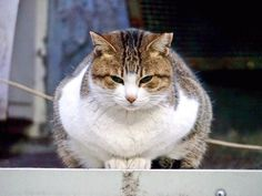 【癒やしと笑いがいっぱい】ツイッターで話題になったおもしろ動物画像20選 - ペット日和
