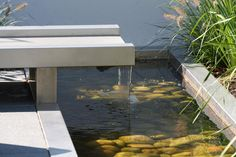 .Organic Pond products create beautiful, healthy, and blue water!  www.organicpond.com