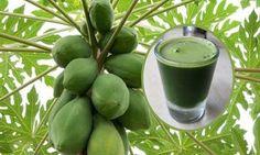 Beneficios del jugo de hojas de papaya ¡IMPRESIONANTES EFECTOS!