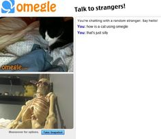 """""""how is a cat using omegle? that is just silly"""" Funny Pins, You Funny, Funny Cute, Hilarious, Funny Stuff, Omegle Funny, Funny Images, Funny Pictures, Lol"""