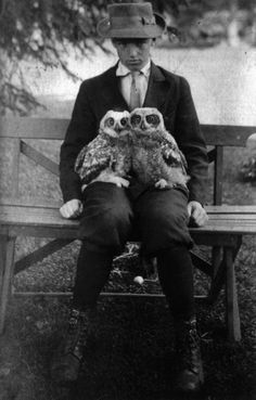 owls and dude