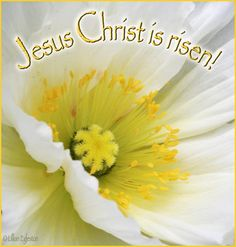 Our Redeemer lives! ~ Wishing everyone a  Blessed and Joyful Easter!