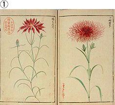 『草花図譜』1 (画像)