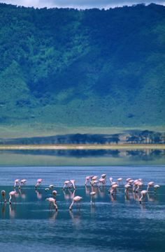 Ngorongoro crater. Tanzania. I wouldn't mind if i could go again. <3