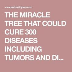 THE MIRACLE TREE THAT COULD CURE 300 DISEASES INCLUDING TUMORS AND DIABETES - Just Healthy Way