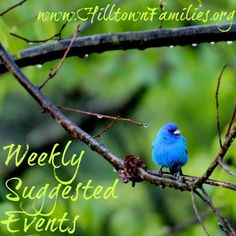 Our list of Weekly Suggested Events is up for this weekend and next week. Pull out those planners and fill it up with fun and engaging community activities happening around the region.