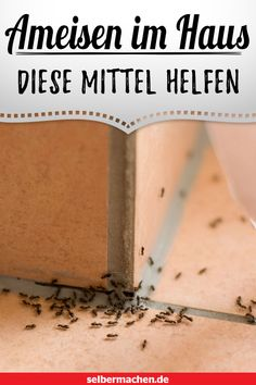 60+ Ameisen bekämpfen Ideen in 2020   ameisen bekämpfen