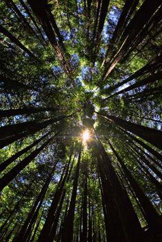 Muir Woods, Marin County, San Francisco