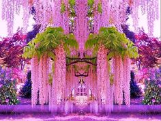 Funny pictures about A purple wisteria flower garden in Japan. Oh, and cool pics about A purple wisteria flower garden in Japan. Also, A purple wisteria flower garden in Japan. Wisteria Japan, Wisteria Garden, Purple Wisteria, Wisteria Tree, Wisteria Tunnel, Chinese Wisteria, Garden Plants, Garden Seeds, Flowers Garden