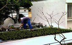 Conheça projetos de telhado verde e hortas na janela