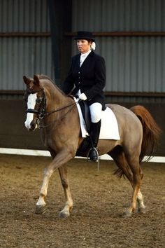 82485842012 Z dressuur with Dempsy Flaing Star Welsh Pony