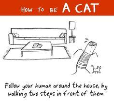 #follow your human around