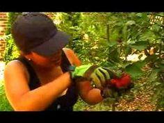 Garden Girl TV: Lawns to Edible Landscapes