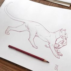 Animal Sketches, Animal Drawings, Cool Drawings, Fantasy Drawings, Big Cats Art, Cat Art, Cat Drawing, Drawing Sketches, Sketch Inspiration