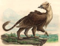 North American Gryphon by Tony DiTerlizzi