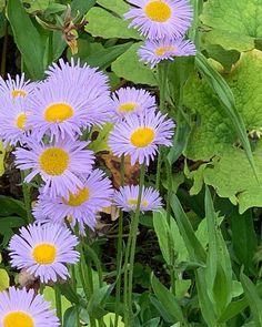 #Flowers #Geneva Geneva, 1, Instagram, Flowers, Plants, Flora, Plant, Royal Icing Flowers, Flower